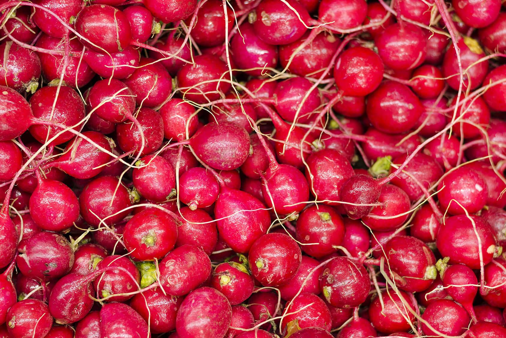 Hochwertige Radieschen von Gemüsebau Großhans