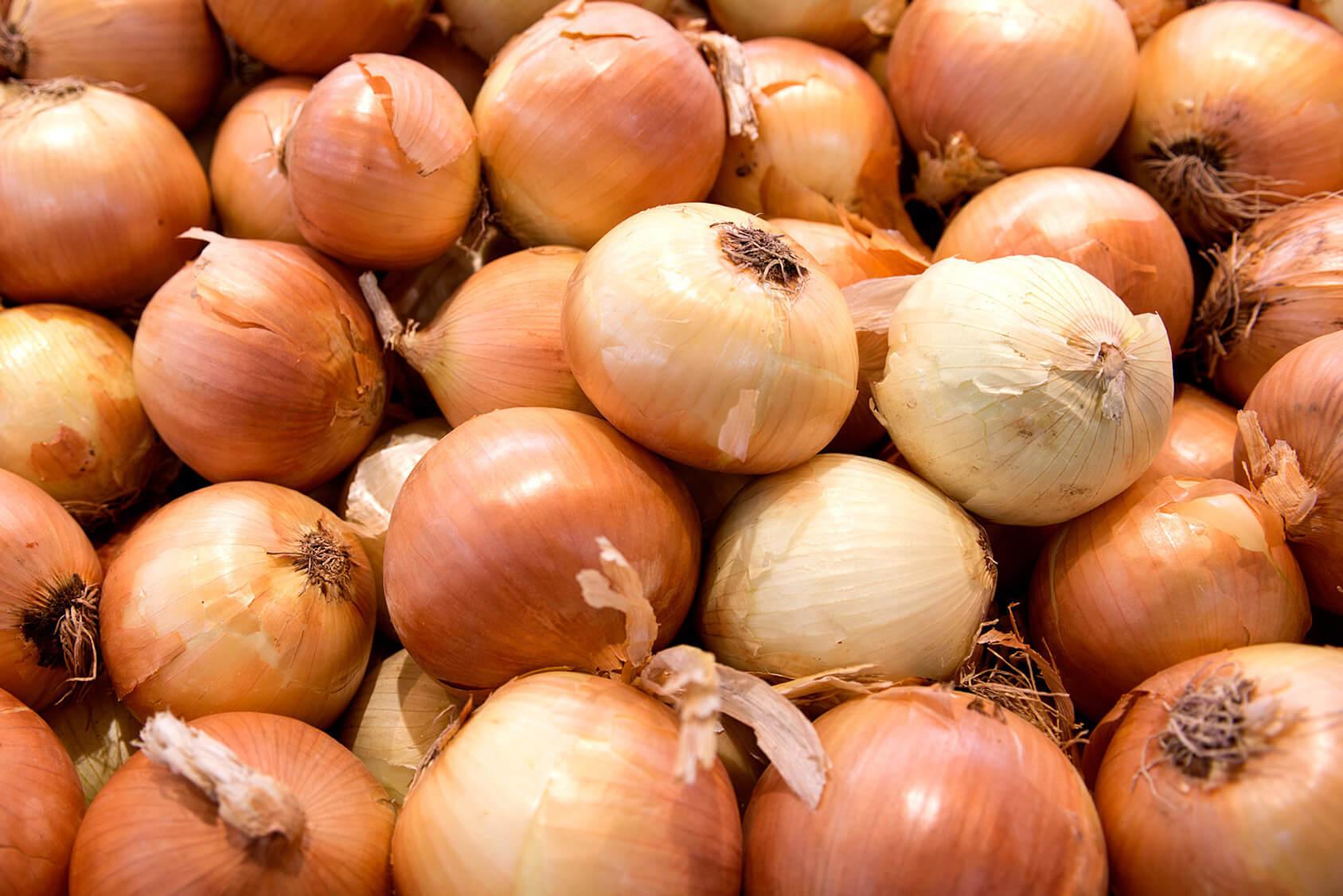 Speisezwiebeln von Gemüsebau Großhans